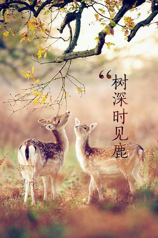 个性网-qq皮肤-树深时见鹿._女生_森系