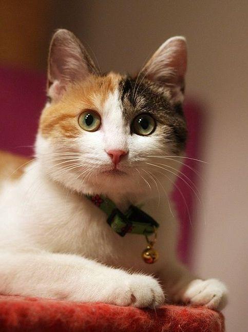 个性网-qq皮肤-可爱猫咪新年的图片_唯美_可爱