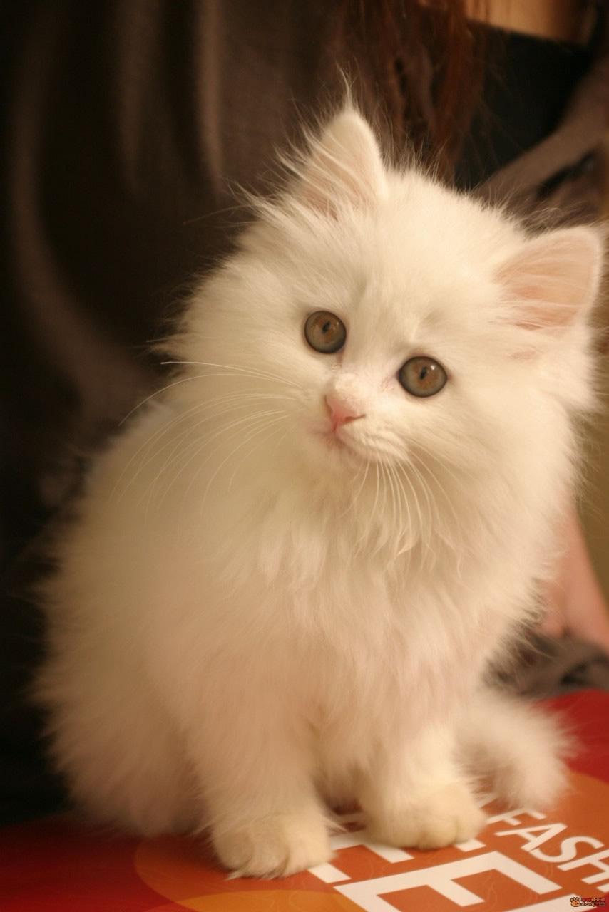皮肤透明可爱猫咪