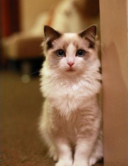 可爱超萌的小猫咪